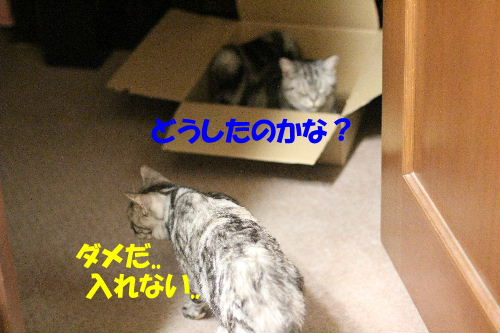 IMG_8911.JPG
