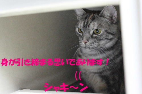 IMG_8985.JPG